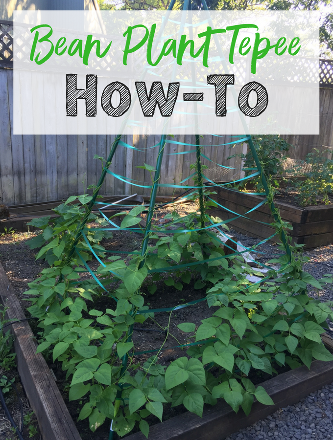 How-To instructions for making your own Bean Plant Tepee! Such a fun summer project for kids!
